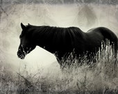 "Horse Silhouette, Fine Art Photography, 8"" x 12"", Fine Art Photography Print"