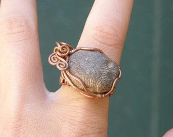 Seashell Fossil ring