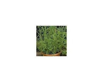 15 German Tarragon Seeds-1227