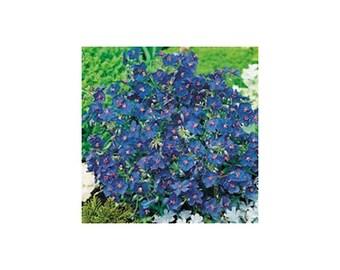 15 Blue Pimpernel Flower Seeds-1183