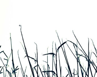 Botanical Art Print - Black and White Nature Photo - Fine Art Print, bathroom wall art,  Minimalist Art for men 8x8 or 8x10