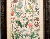 Types of Dangerous Plants Art Print from 1912 on Parchment Paper