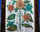 Multiple Sunflowers Art Print from 1713 on Vintage Dictionary Book Page