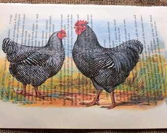 Barred Plymouth Rock Chickens Art Print on Random Page of Vintage Cookbook