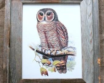Vintage Mottled Wood Owl Art Print on Artist Drawing Paper