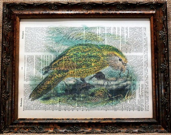 New Zealand Kakapo Art Print on Vintage Dictionary Book Page
