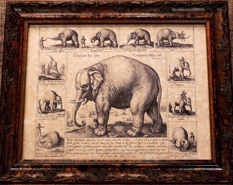 Trained Elephant Line Art from 1629 Art Print on Parchment Paper