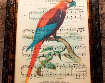 Jamaican Red Macaw Art Print from 1907 on Antique Music Book Page