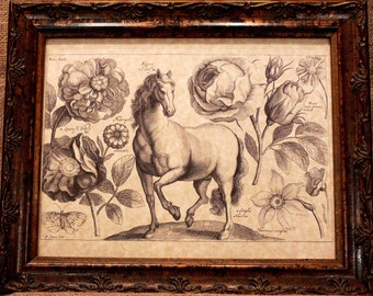 Horse Line Art from 1600's Art Print on Parchment Paper