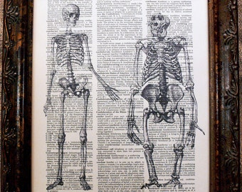 Man and Ape Skeletons on Dictionary Book Page