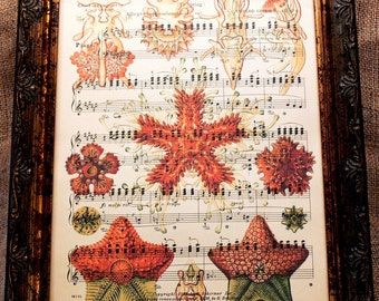 Starfish Art Print from 1904 on Antique Music Book Page