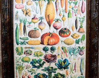 Types of Vegetables Art from 1912 Art Print on Parchment Paper