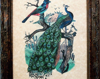 Peacock and Bird Art Print on Parchment Paper