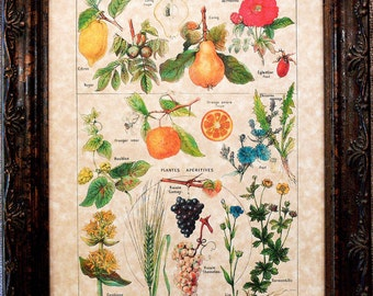 Types of Aperitives Art Print from 1912 on Parchment Paper