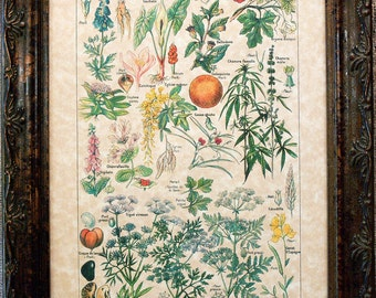 Types of Dangerous Plants Ver. II Art Print from 1912 on Parchment Paper