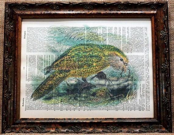 New Zealand Kakapo Art Print on Vintage Dictionary Book Page