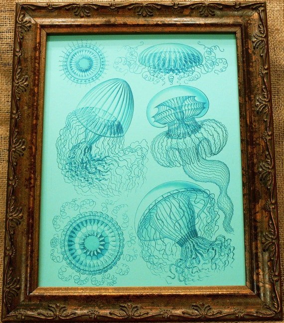 Jellyfish in Blue from 1904 Art Print