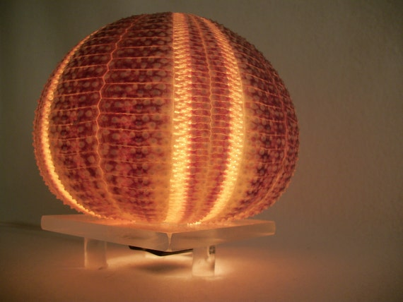night light or mood lighting, sea urchin on clear stand.