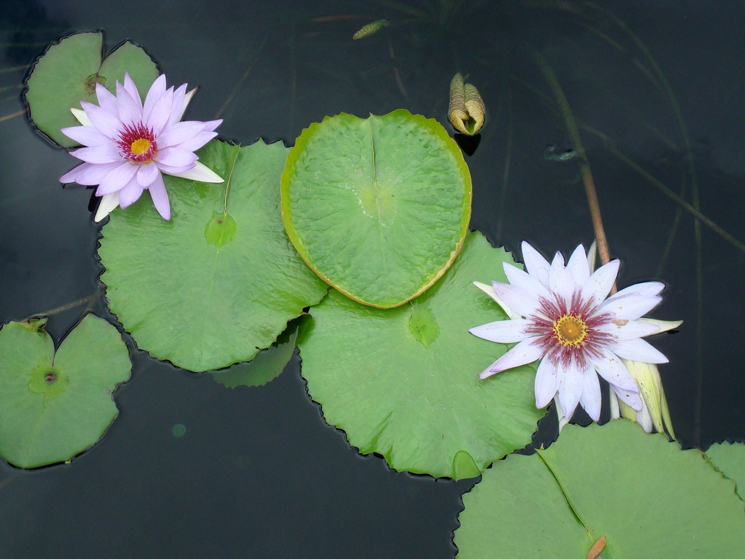 Lily Pad Heart and Flowers by TorchandPaintbrush on Etsy