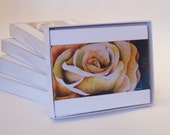 The Rose Note Card Set of 6 from Original Oil Painting