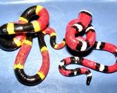 Snake Gauges : Coral/Milk Snake