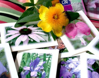 Greeting Cards, Blank Floral Cards - Blank Cards and Envelopes by LindaGeezFlowerPower