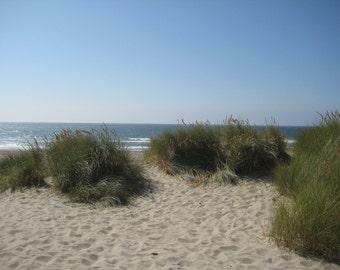 Sea Grass on the Dunes Blank Card