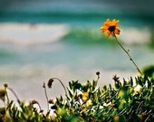 Beach Photography - Yellow Beach Flower - Blue, Ocean, Waves, Summertime, Fun - Fine Art Photography - Encinitas, California 8x10