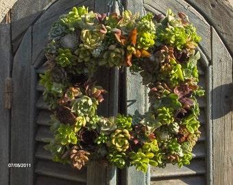 Succulent Wreath -Square Succculent Wreath, Live Succulent Wreath, Wedding Centerpiece