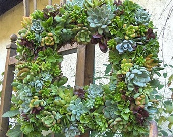 "Live Succulent Wreath Square Succulent Wreath- 15 "" Square Succulent Wreath Perfect Gift or Home Decor"