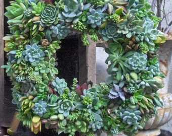 "Live Succulent Wreath 15"" Succulent Wreath -Square Succulent Wreath - Fathers Day Gift,  Home Decor, Wedding Centerpiece"
