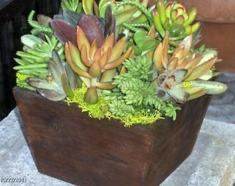 Fathers Day Gift Succulent  Centerpiece, Fathers Day Succulent Garden, Succulent Tabletop - Succulent Table Decor Centerpiece