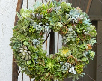 "Special Listing for Sarah 2 Succulent Wreaths - 15"" Round Succulent Wreath - Round Succulent Wreath"