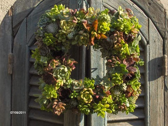 Succulent Wreath -Square Succculent Wreath, Live Succulent Wreath, Wedding Centerpiece