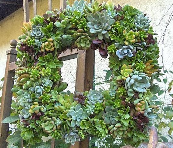"Live Succulent Wreath Square Succulent Wreath- 15 "" Square Succulent Wreath Perfect Gift or Home Decor"