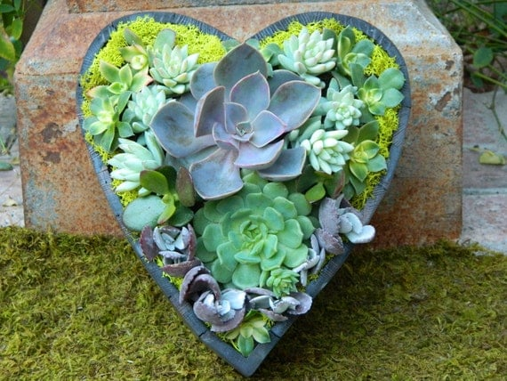Succulent Centerpiece Succulent Heart Shape Succulent Arrangement Succulent Wedding Succulent Planter
