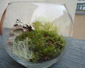 Mini Live Moss Terrarium with Lichen