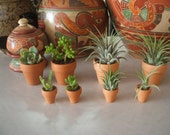 """1"""" red clay pot for air plants and more"""