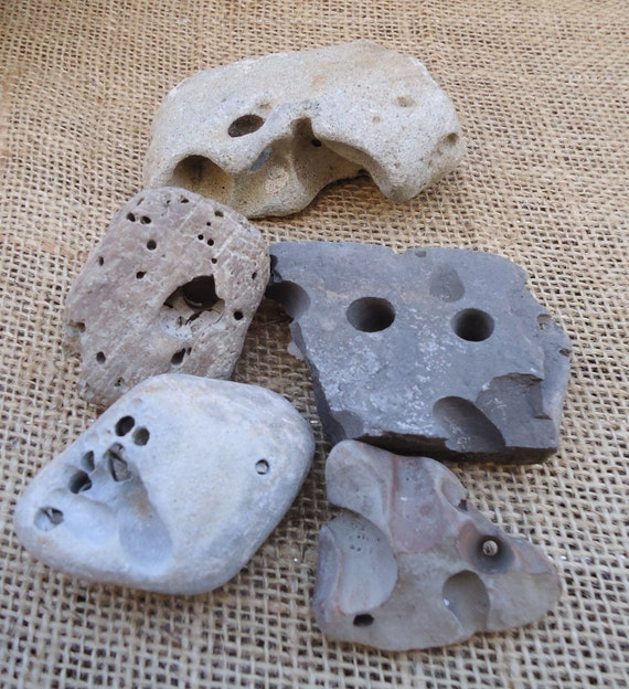 5 Pack Worm Rocks for Rock Gardens, Plant Stands, Crafts