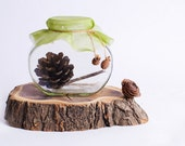 Home decor -  jar with  Pine cones. Rustic style. House decorations  Brown green white Christmas kitchen
