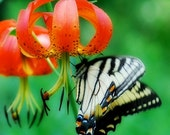 butterflies woodland nature red flower 8x10 photograph by Eahkee
