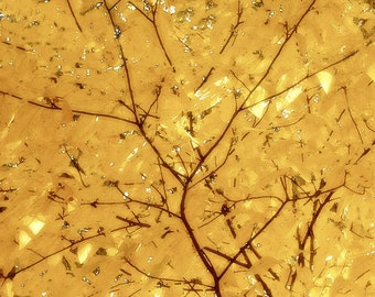 Fall  Photography, Autumn Leaves Photography, Tree Photography, Nature Photography, Gold Abstract Art, Large Photography wall art