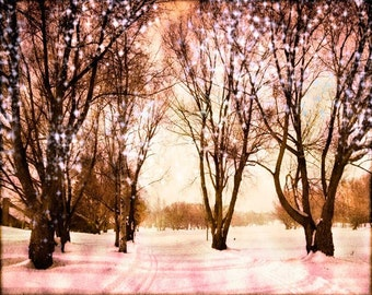 Tree Photography, Starry Lights, Forest Photography, Nature Wall Art, Fall, Winter Decor, Whimsical, Pink Art Large