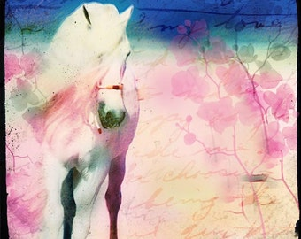 Horse Photography, White Horse, Horse Art Print, Home Decor, Nursery, Whimsical