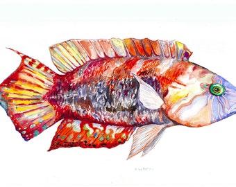 Colorful Bi-Ocellatus Wrasse Watercolor