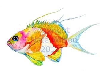 Reef FIsh, Sacura Anthias