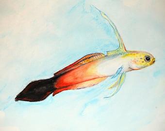 Orange Firefish
