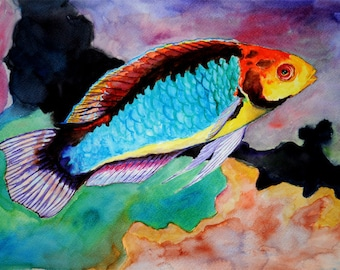 Soloriensis Wrasse Watercolor