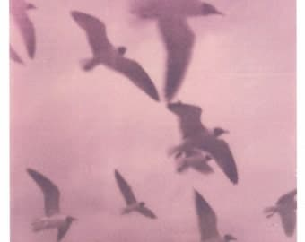 "Lavender Gulls -- 8"" by 8"" Polaroid print"