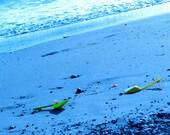 Summery Children's Beach Shovels